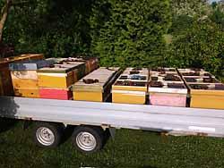 Anhänger mit Bienenvölkern