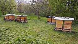 Einer unserer Bienenstandorte in einem Obstgarten