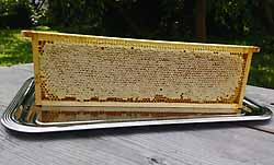 Wabenhonig,  eine frische Honigwabe aus dem Bienenvolk