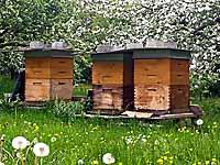 Unsere Bienenkästen aus Holz in einem biologisch bewirtschaftetem Obstgarten