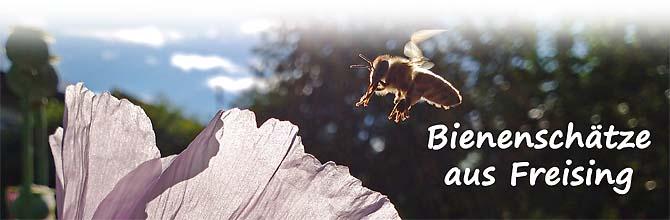 Biene im Anflug an Mohnblüte
