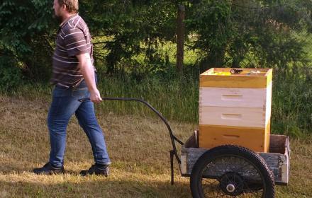 Mit den Bienen wandern macht viel Arbeit, tut den Bienen aber gut